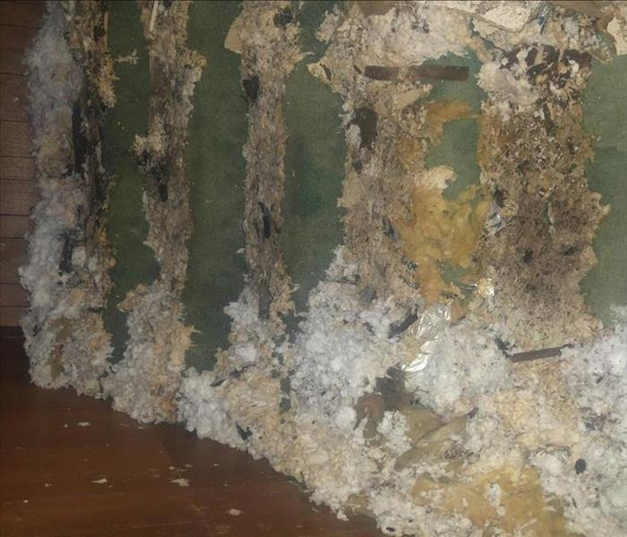 Mold Remediation Mold in Aberdeen, WA