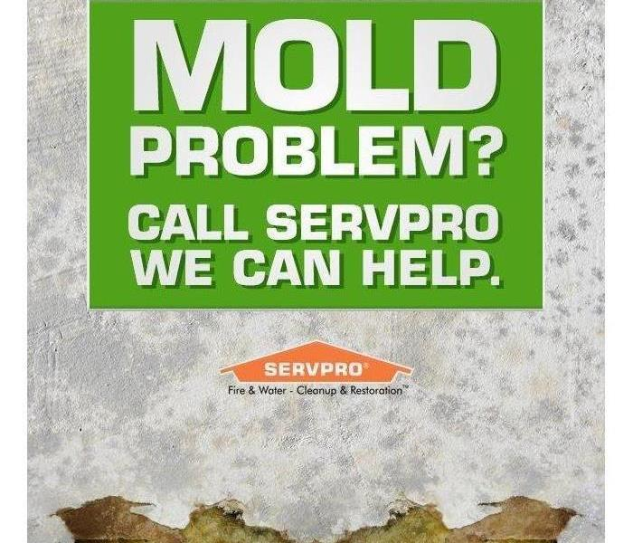 Mold Remediation Mold Where?